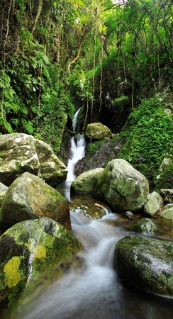 Hidden rain forest waterfall with lush foliage and mossy rocks  photo