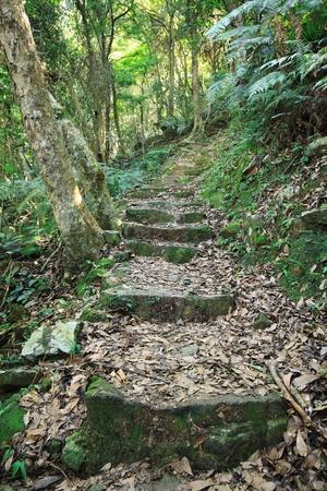 bamboo tree: green path  Stock Photo