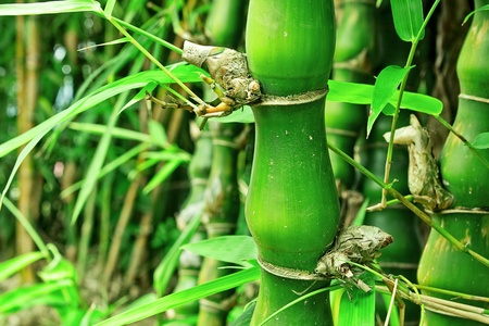 bamboo Stock Photo - 10722299
