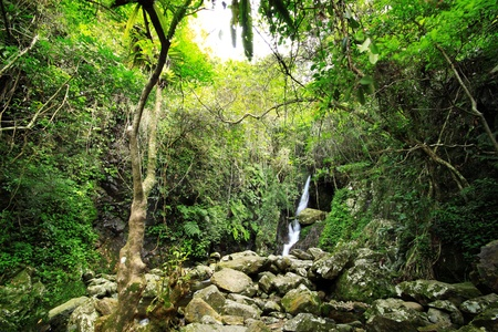 temperate: Hidden rain forest waterfall with lush foliage and mossy rocks  Stock Photo