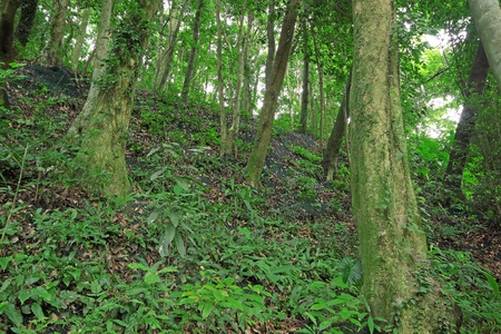 woodland scenery: Trees in the forest and Retaining wall
