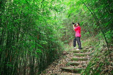canary: photographer taking photo in bamboo path