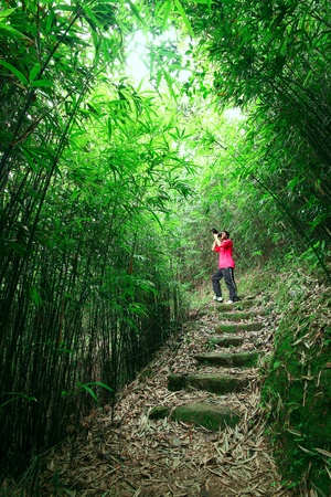 photographer taking photo in bamboo path  photo