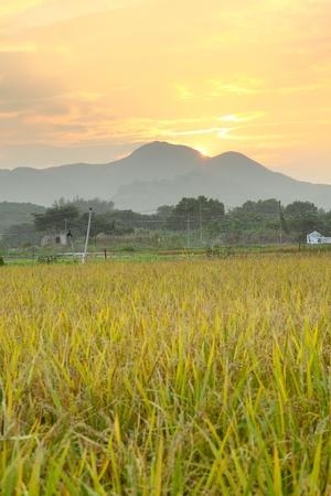 hayroll: Golden sunset over farm field  Stock Photo