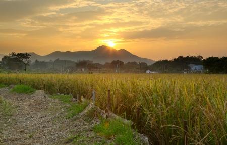 Goldener Sonnenuntergang über Bauernhof-Feld