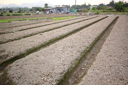 Tierra cultivada Foto de archivo - 12109054