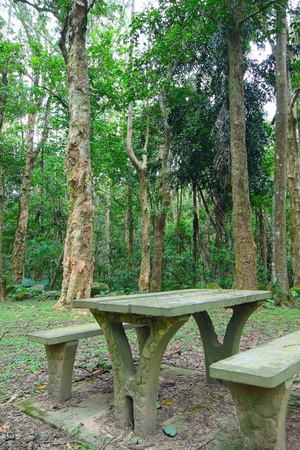 Picnic place in forest photo