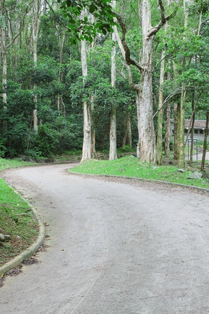 car road in forest photo