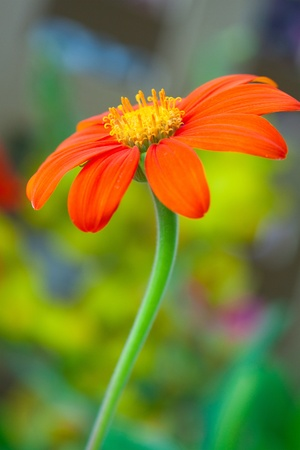 red flower with green buds on blurred background  photo
