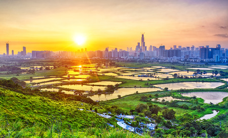 rural skyline: sunset in hong kong countryside, rice field and modern office buildings