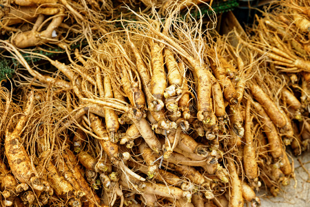 crowd of real ginseng from the North of Korean Republic. photo