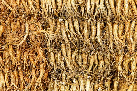 ginseng roots: crowd of real ginseng from the North of Korean Republic.