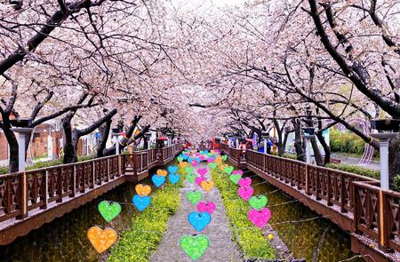 한국에서 일 부산 도시에서 벚꽃