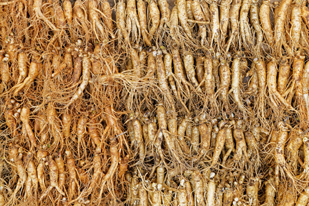 new medicine: crowd of real ginseng from the North of Korean Republic Stock Photo
