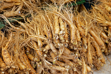 ginseng: crowd of real ginseng from the North of Korean Republic Stock Photo