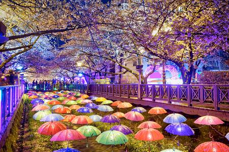 cerezos en flor: flores de cerezo sakura en la noche, la ciudad de Busan en Corea del Sur