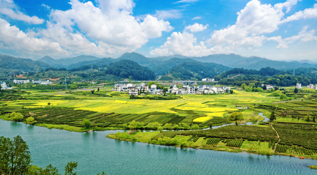 landscape flowers: Rural landscape in wuyuan county, jiangxi province, china.