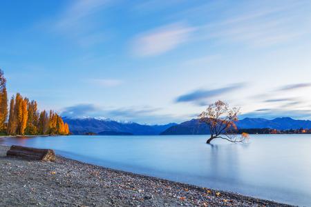 Famous tree at Lake Wanaka in sunrise, South Island of New Zealand.
