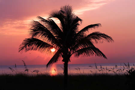 Palm tree silhouette on sunrise photo
