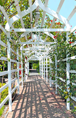 garden arbor with creeping roses photo