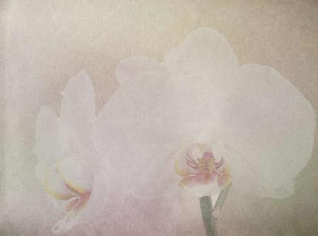 분홍색과 흰색 난초와 오래 된 종이 배경 질감