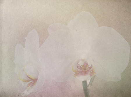 textured old paper background with pink and white orchid  photo