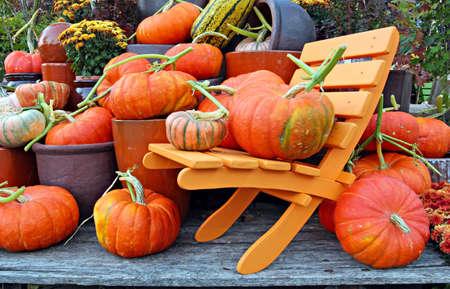 Een verzameling van de herfst pompoenen Stockfoto