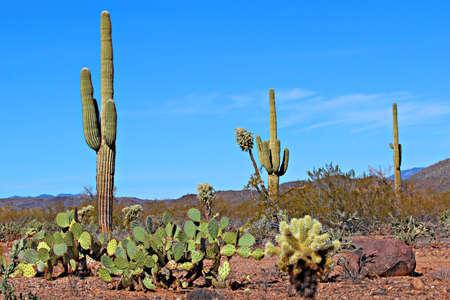 The diversity of the Arizona desert landscape photo