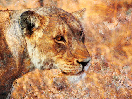 Lioness Rust Art photo