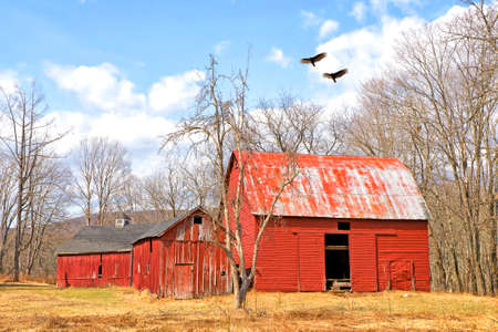 Turkey Vultures flying over old abandoned red barn in the Delaware Water Gap photo