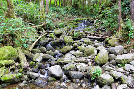 forest stream: A forest stream