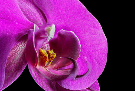 macro image: Beautiful macro image of a purple orchid Stock Photo