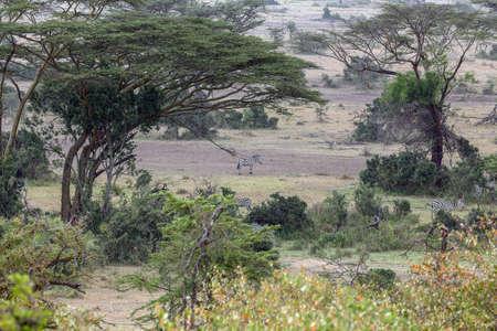 Vista view of the African bush Stock fotó - 82170157
