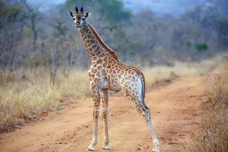 un bebé joven africano de sudáfrica