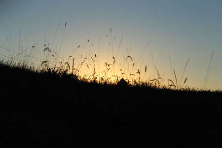 cattails: Cattails silhouetted in the sunset