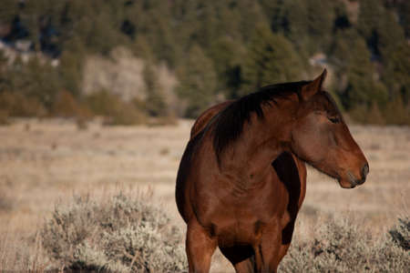 sagebrush: The Horse and the Mountain