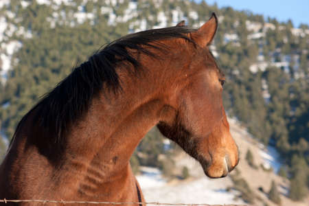 bridger: Horse in the Mountains