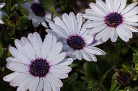 flor: Flor Macro