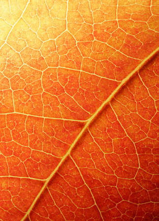 Macro of a colored leaf in fall Stock Photo - 747337