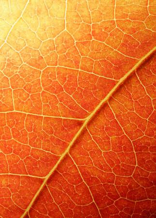 Macro van een gekleurde bladeren in de herfst