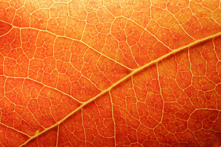 Macro of a colored leaf in fall