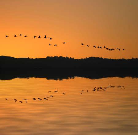 migrate: Migrating Birds