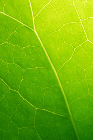 Close up of green leaf  Stok Fotoğraf