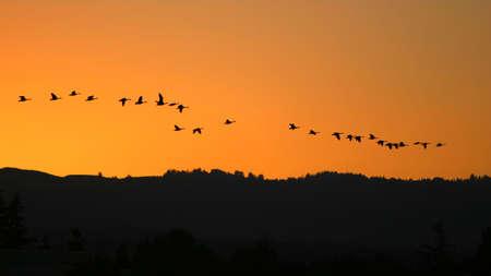 Migrating Birds at sunset photo