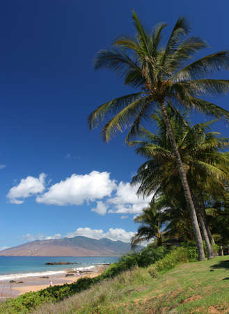 Tall palm trees on beach in Maui Stock Photo - 1788624