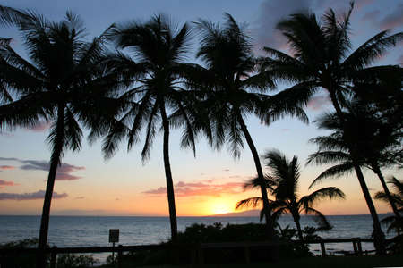 Silhouettes of Palm trees at sunset in Maui Stock Photo - 2705204