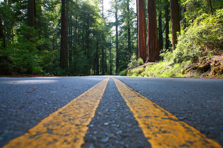 Empty road in Redwood Forest