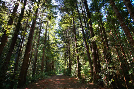 Trail in sequoia giant forest Stock Photo