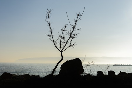 Tree silhouette on the beach with rocks and fog Standard-Bild