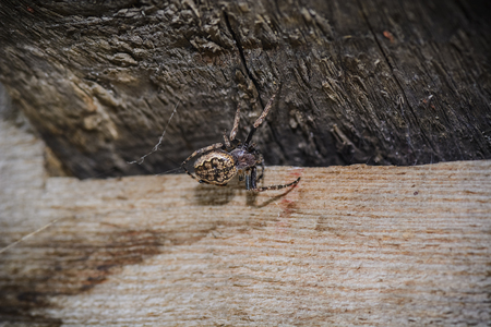 Single Spider doing its web in a wood angle 스톡 콘텐츠